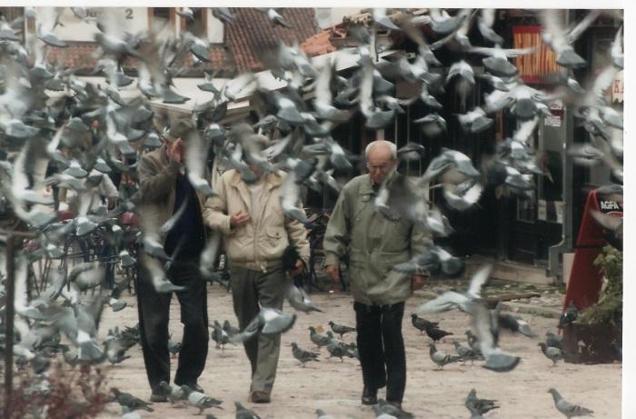 sarajevo pigeons
